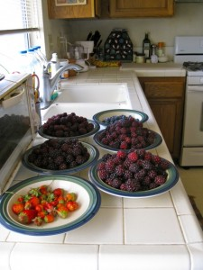 Berry Harvest This Morning