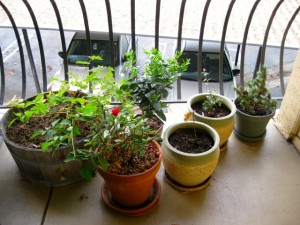 Other half of garden